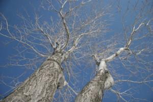 01trees