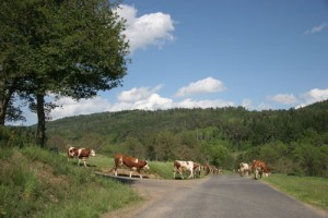 03_vaches_route_01