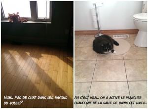 chatchauffant